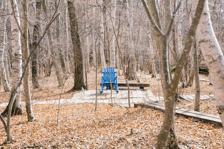雑木林に置かれた椅子