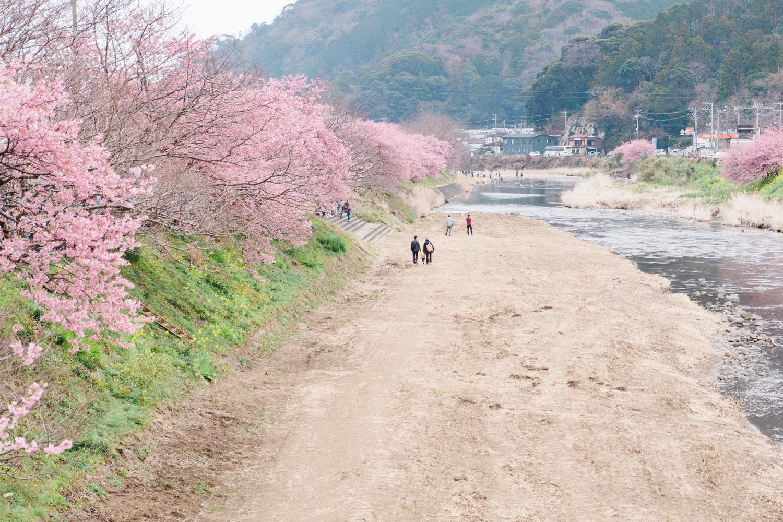 河津桜まつりの様子21