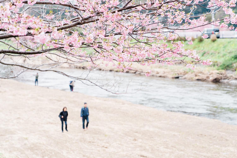 河津桜まつりの様子20