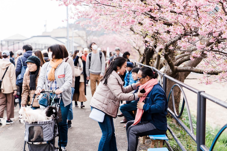 河津桜まつりの様子6