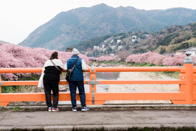 河津桜まつりの様子13