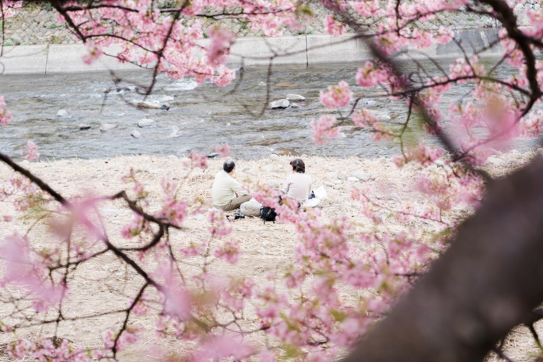 河津桜まつりの様子19