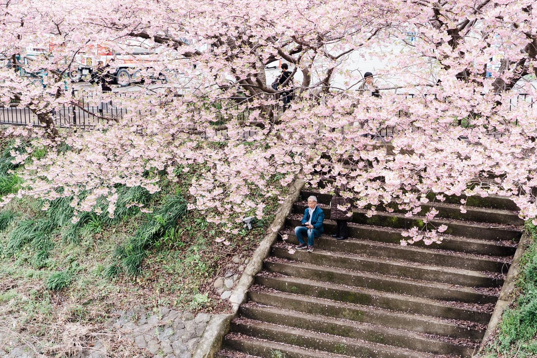河津桜まつりの様子18