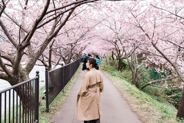 河津桜まつりの様子26