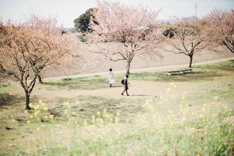 上から見る桜も良い