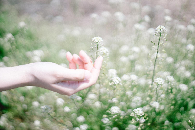 花は元気に育っている