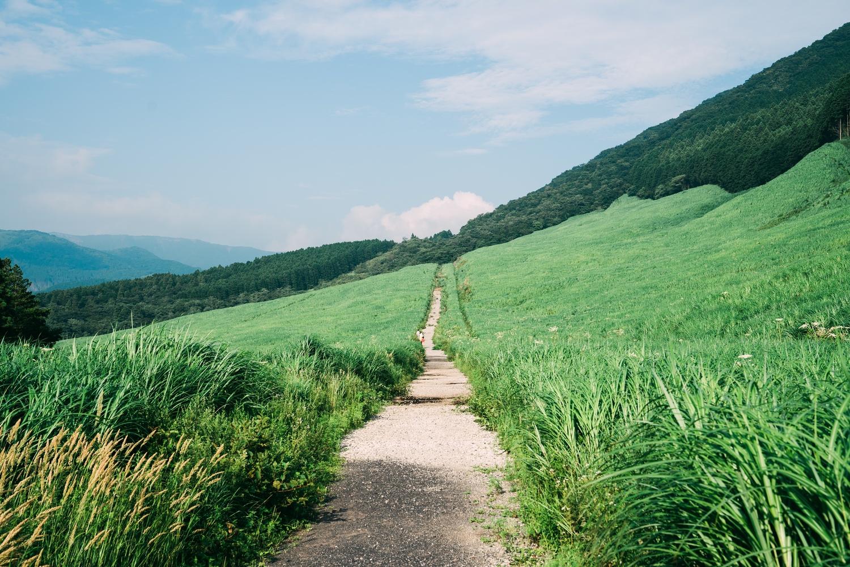 7月下旬の新緑のすすき草原