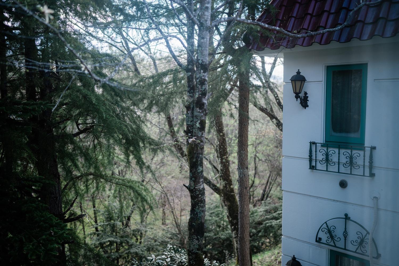 部屋から眺める軽井沢の森
