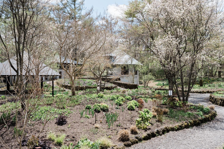 原生植物を使った庭